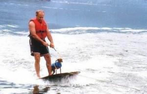 Dog Water Skiing