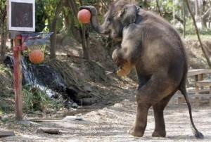 funny sports elephant basketball