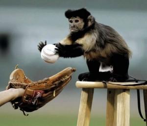 funny sports monkee baseball