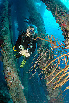 Diver under the Salt Pier, Bonaire, Dutch Antilles
