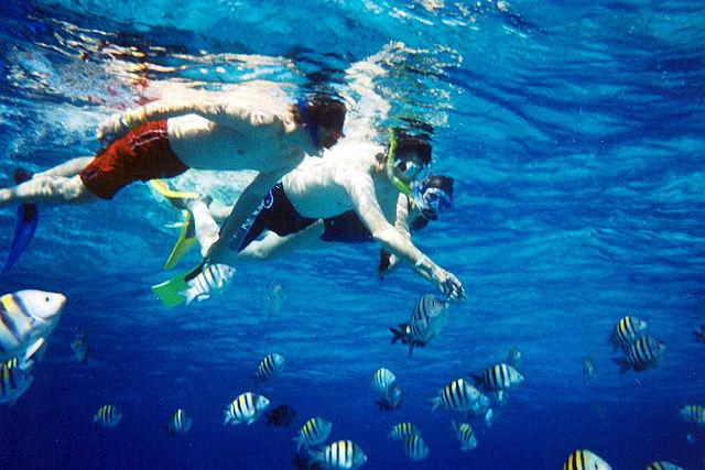Snorkelers watching fish