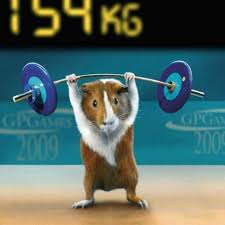 Introducing Bodybuilder:  Arnold Schwarzenhamster!