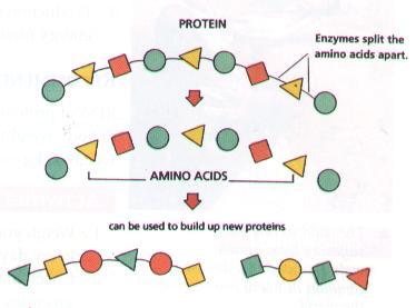 Proteins | Biochemistry3rst |Proteins Amino Acids